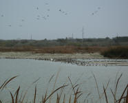 texas duck guided hunting